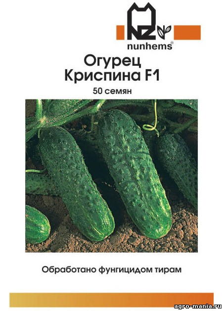 Огурцы криспина f1 выращивание 47