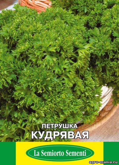 Кучерявая петрушка выращивание 71